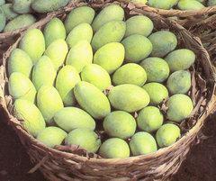 green_mangoes2.jpg