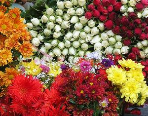 Fresh Flowers of Baguio