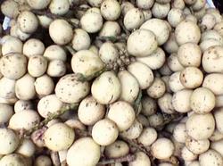 Camiguin Lanzones Fruit