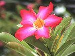 flora1.00.jpg